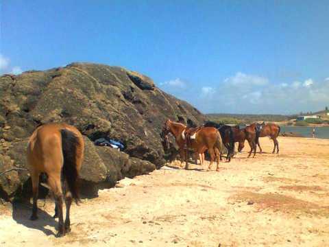 5 horses at Lagoon