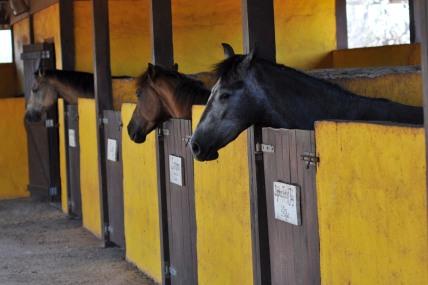 Happy horses at the rancho
