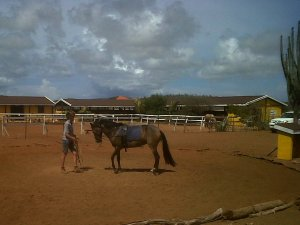 rancho washikemba horse ranch bonaire Marybell