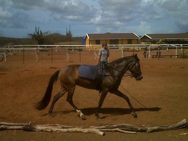 rancho washikemba horse ranch bonaire Marybell
