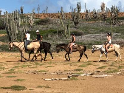 foto cactussen paarden